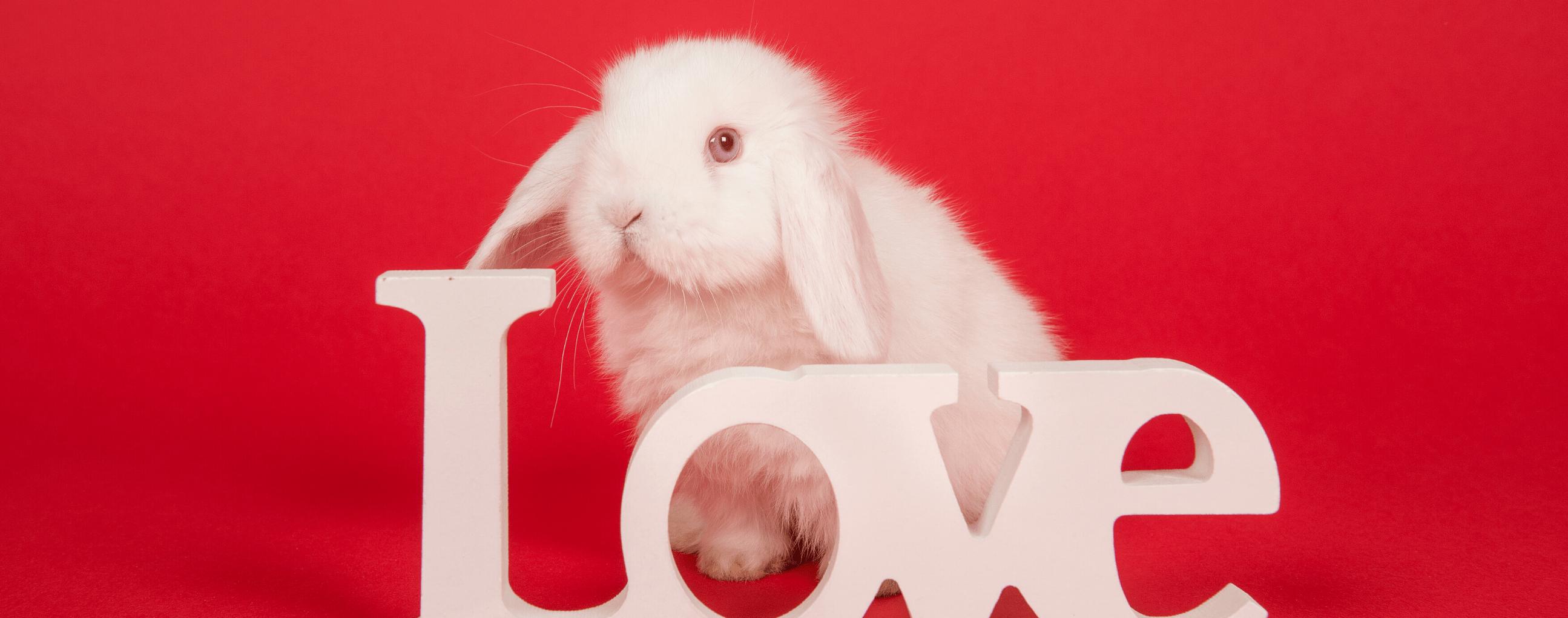 Valentine's Date Ideas - Bunnies and Wine